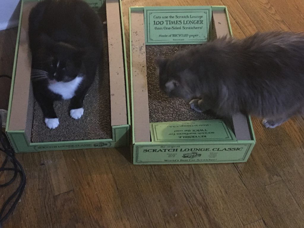 "two cats, one black and white, one fuzzy and grey, hanging out on carboard scracth ""lounges"" and consuming catnip"